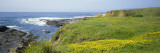 Wildflowers on a Cliff Near an Ocean, Marin Headlands, Westport, California, USA Wall Decal by  Panoramic Images