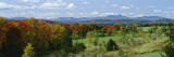 Trees in the Forest, Newport, Vermont, New England, USA Wall Decal by  Panoramic Images