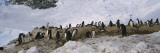 Gentoo Penguins on a Landscape, Neko Harbor Wall Decal by  Panoramic Images
