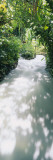 Blue Hole Gardens River, Negril, Jamaica Wall Decal by  Panoramic Images