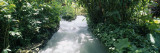 Blue Hole Gardens River, Tropical Foliage, Negril, Jamaica Wall Decal by  Panoramic Images