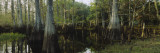 Reflection of Trees in Water, Fisheating Creek, Everglades, Palmdale, Florida, USA Wall Decal by  Panoramic Images