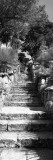 Steps in a Garden, Neptune's Steps, Tresco Abbey Garden, Tresco, Isles of Scilly, England Wall Decal by  Panoramic Images