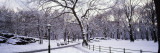 Bare Trees During Winter in Central Park, Manhattan, New York City, New York, USA Decalcomanie da muro di Panoramic Images,