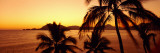 Silhouette of Palm Trees at Dusk, Manzanillo, Mexico Wall Decal by Panoramic Images