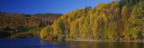 Forest at the River Side, Highland Perthshire, Loch Faskally, Scotland Wall Decal by  Panoramic Images