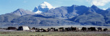 Herd of Yak and Tents in Front of Mountains, Tibet Wall Decal by  Panoramic Images