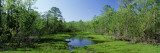Lake in a Forest, Houma Area, Southern Louisiana, USA Wall Decal by  Panoramic Images