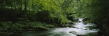 River Flowing in the Forest, Aberfeldy, Perthshire, Scotland Wall Decal by  Panoramic Images