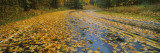 Leaves Covered Road Passing Through a Forest, Near Traverse City, Michigan, USA Wall Decal by Panoramic Images