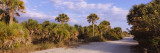 Trees Along a Dirt Road, Caspersen Beach, Venice, Sarasota County, Florida, USA Wall Decal by  Panoramic Images