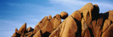 Close-Up of Rocks, Mojave Desert, Joshua Tree National Monument, California, USA Wall Decal by  Panoramic Images
