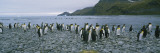 Colony of King Penguins on the Beach, South Georgia Island, Antarctica Wall Decal by  Panoramic Images