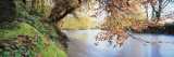 Trees Along a River, River Dart, Bickleigh, Mid Devon, Devon, England Wall Decal by  Panoramic Images
