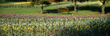 Tulips in a Field, Grand Rapids, Michigan, USA Wall Decal by  Panoramic Images