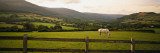 Horse in a Field, Enniskerry, County Wicklow, Republic of Ireland Wall Decal by  Panoramic Images