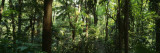 Trees in a Forest, Rainforest, Trianon Park, Sao Paulo, Brazil Wall Decal by  Panoramic Images