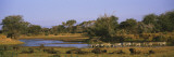 Herd of Zebra and African Buffalo in a Field, Uaso Nyrio River, Samburu, Kenya Wall Decal by  Panoramic Images