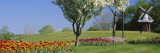 Flowering Plants in Front of a Traditional Windmill in a Park, Grand Rapids, Michigan, USA Wall Decal by  Panoramic Images