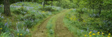 Tire Tracks on a Field, Lupine, Arrowleaf Balsamroot, Oregon, USA Wall Decal by  Panoramic Images