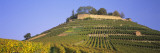 Vineyards on a Hill, Weinsberg, Baden-Wurttemberg, Germany Wall Decal by  Panoramic Images