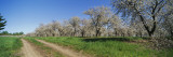 Dirt Road Passing Through a Cherry Orchard, Leelanau Peninsula, Michigan, USA Wall Decal by  Panoramic Images
