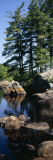 View of Rocks in a River, Moose River, Adirondack Mountains, New York State, USA Wall Decal by  Panoramic Images