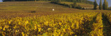 Vineyard on a Landscape, Bourgogne, France Wall Decal by  Panoramic Images