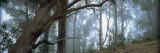 Trees in a Forest, Rabacal, Madeira, Portugal Wall Decal by  Panoramic Images
