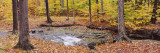 Stream Flowing Through a Forest, Emery Park, East Aurora, Erie County, New York, USA Wall Decal by  Panoramic Images