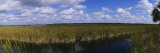 Reflection of Tall Grass and Cloud in Water, Everglades National Park, Florida, USA Wall Decal by  Panoramic Images