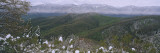 Plants on a Mountain, Blue Ridge Mountains, Mount Mitchell, North Carolina, USA Wall Decal by  Panoramic Images