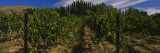 Vineyard, Red Mountain Appellation, Columbia Valley, Washington, USA Wall Decal by  Panoramic Images