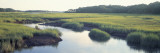 Salt Marsh Cape Cod Ma, USA Wall Decal by  Panoramic Images
