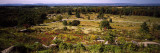 Trees in a Field, Gettysburg National Military Park, Gettysburg, Adams County, Pennsylvania, USA Wall Decal by  Panoramic Images