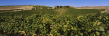 Vineyard on a Landscape, Yakima Valley Appellation, Washington, USA Wall Decal by  Panoramic Images