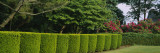 Hedge in a Park, Colt State Park, Bristol, Rhode Island, USA Wall Decal by  Panoramic Images