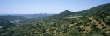 Olive Trees on a Landscape, Andalusia, Spain Wall Decal by Panoramic Images 