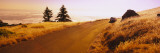 Car Moving on a Road, Mt Tamalpais, Marin County, California, USA Wall Decal by  Panoramic Images