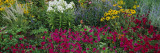 Close-up of Flowers in a Garden Wall Decal by  Panoramic Images