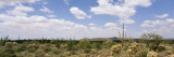 Cactus Plants on a Landscape, Sonoran Desert, Superstition Mountains, Arizona, USA Wall Decal by  Panoramic Images