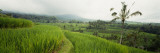 Rice Paddies on a Landscape, Bali, Indonesia Wall Decal by  Panoramic Images
