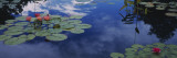 Water Lilies in a Pond, Denver Botanic Gardens, Denver, Denver County, Colorado, USA Wall Decal by  Panoramic Images