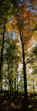 View of Trees in a Forest at Carpenter Falls, Finger Lakes, New York State, USA Vinilo decorativo por Panoramic Images