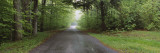 Trees on Both Sides of a Road, Chestnut Ridge County Park, Orchard Park, New York State, USA Wall Decal by  Panoramic Images