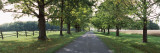Trees on the Both Sides of a Road, Knox Farm State Park, East Aurora, New York State, USA Wall Decal by  Panoramic Images
