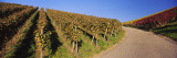 Vineyards Along a Road, Baden-Wurttemberg, Germany Wall Decal by  Panoramic Images