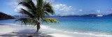 Palm Tree on the Beach, Salomon Beach, Virgin Islands National Park, St. John, US Virgin Island Wall Decal by Panoramic Images