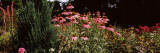 Flowers in Elizabeth F. Gamble Garden, Palo Alto, Silicon Valley, California, USA Wall Decal by  Panoramic Images