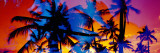 Silhouette of Palm Trees at Sunset, Ko Olina, Oahu, Hawaii, USA Wall Decal by  Panoramic Images